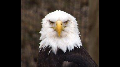 Art Eagle Announcement live Stream